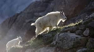 Colorado wild animals images Colorado wildlife wildlife watching in colorado jpg