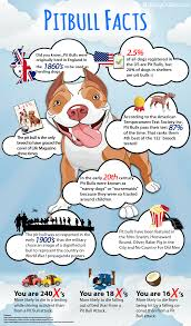 american pitbull terrier traits facts about pit bulls dog collars