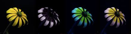 uv light for birds invisible colors the artful brain learn science at scitable