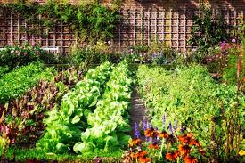 how to design vegetable garden how to plan a pretty and productive vegetable garden mothernature