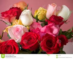 Colorful Roses Colorful Roses Stock Photography Image 624162