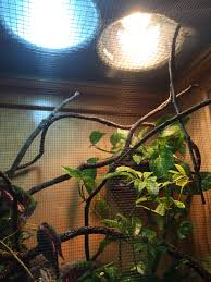 Reptile Heat Lamps Safety by Basking Area For A 7 Month Old Male Veiled Chameleon One Reptisun