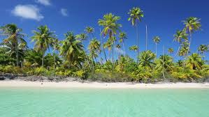 tropical island palm trees and white sand stock footage