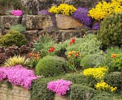 Image Of Rock Garden Plants To Use In Rock Gardens Lovetoknow