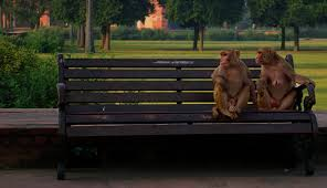 Monkey Bench Creating Beauty In The Mundane Great Photos Of Park Benches