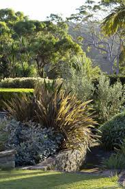 australian native screening plants best 25 australian garden ideas on pinterest australian garden