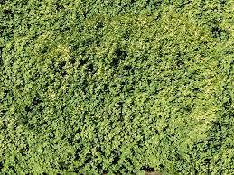 texture vegetation lugher texture library