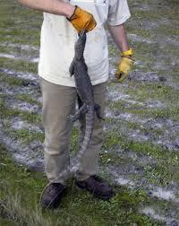 Seeking Lizard Sensation Seeking Splette S Travel