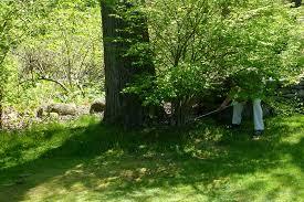 memorial tree my usual david owen