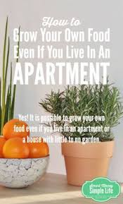 how to grow your own food even if you live in an apartment key