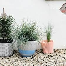 create your own micro garden wild u0026 grizzly