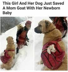 Cutest Memes - animals make the cutest memes cutesypooh