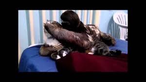 Sloth Whisper Meme - when he whispers in your ear sloth youtube