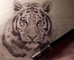 roar u2013 jb art drawings