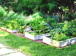 small vegetable garden design small vegetable garden ideas 800x600