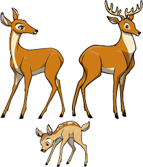 deer family g creative for