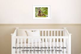 safari nursery decor baby orangutan play photo print baby