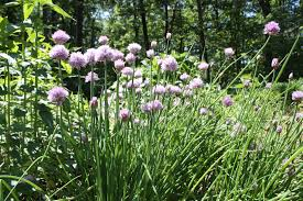 native plants of new england native wildflowers grasses and ferns keystone wildflowers