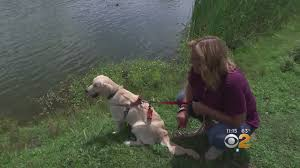California Wildfires Pets by California Wildfires Rage On Cbs New York