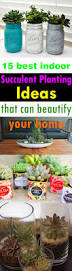 Indoor Succulent Container Gardens 15 Best Indoor Succulent Planting Ideas That Can Beautify Your