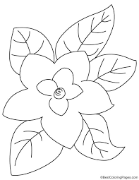 magnolia with leaves coloring page download free magnolia with