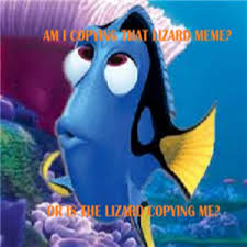 Dory Memes - unique dory memes dory lizard meme roblox kayak wallpaper