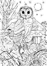 barn owl coloring pages print pinterest owl