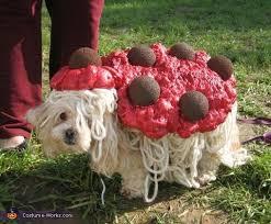 Dogs Halloween Costume 57 Dog Halloween Costumes Images Dog Halloween