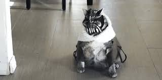 Sneaky Cat Meme - bane cat coub gifs with sound