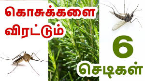 plants that repel mosquitoes tamil health tips youtube