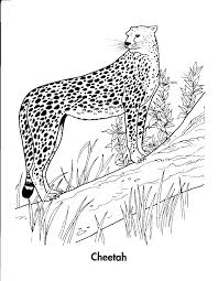 20 cheetah coloring pages coloringstar