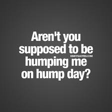 Hump Day Meme Dirty - 56 best hump day quotes images on pinterest hump day quotes camel