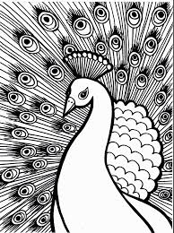 peacock coloring pages bestofcoloring com