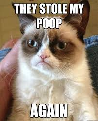 Meme Poop - they stole my poop again grumpy cat know your meme
