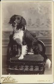 916 best vintage dogs images on pinterest vintage dog vintage