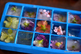 edible flowers for sale edible flower cubes the view from great island