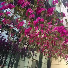 Floral Design Business From Home Lee James Floral Designs Florist Orlando Florida 62 Reviews