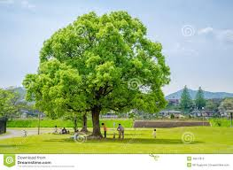 kids with their parents playing under big tree editorial image
