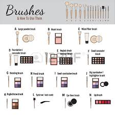 brushes for makeup with names vector illustration royalty free