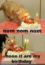 Nooo Meme - nooo it are my birthday cheezburger funny memes funny pictures