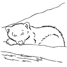 10 free printable brown bear coloring pages