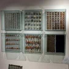 Curio Display Cabinets Uk Top 25 Best Museum Display Cases Ideas On Pinterest Display