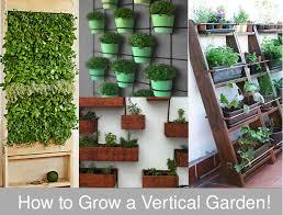 Vertical Garden For Balcony - complete guide to grow vertical garden