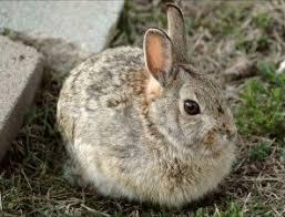 9 reasons shouldn u0027t buy bunny save animals peta kids