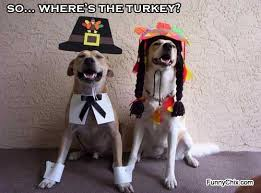 Funny Turkey Videos Thanksgiving 7 Funny Thanksgiving Pictures Cats Dogs Turkeys Pilgrims