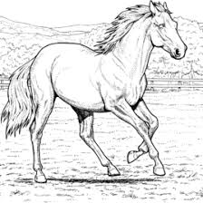 free printable horse coloring pages kids realistic horse