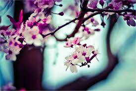 blooms flowers blooms flowers on tree bossfight