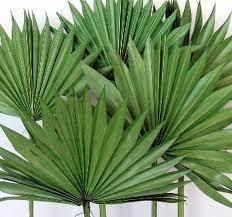 ornamental plants from bengaluru