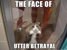 Diabetes Cat Meme - the face of utter betrayal diabetes uk