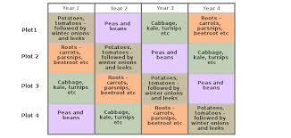 vegetable plant rotation chart